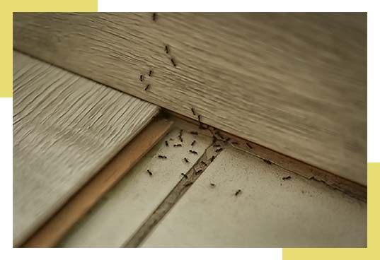 Ant Control and Extermination Dallas-Fort Worth Area