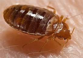 Integrity Termite & Pest Services - Bed Bugs Removal