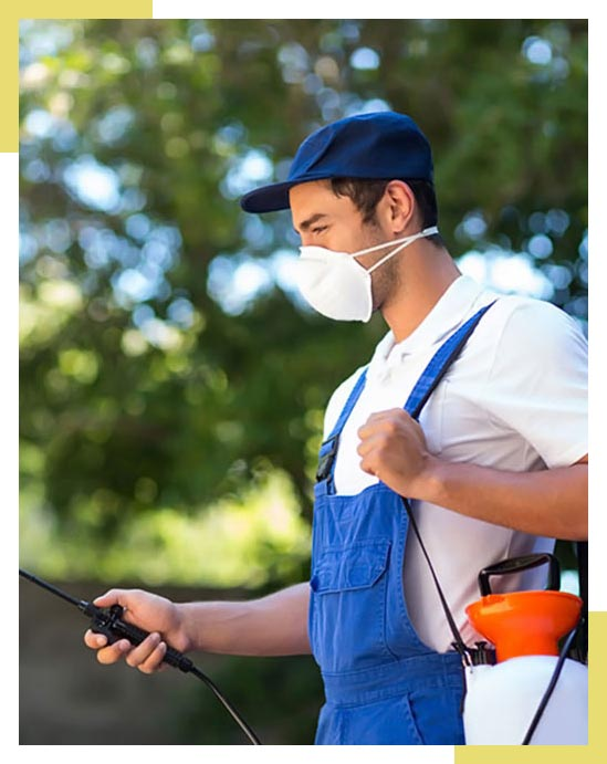 Quality Pest Control Service Dallas Fort Worth