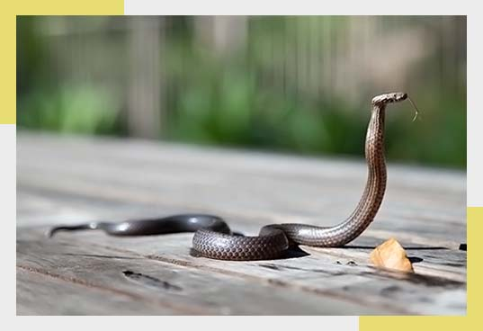 Snake Removal and Pest Control in Dallas