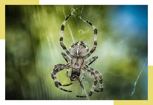 Spider Control Services Dallas Fort Worth Area
