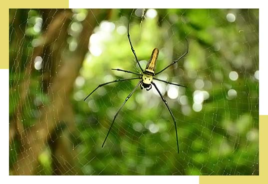 Signs of Spider Infestation in Residential and Commercial