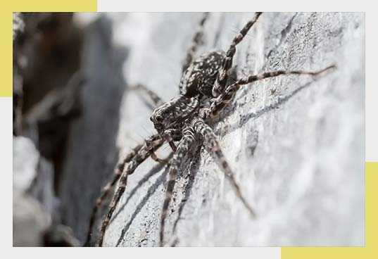 Common Signs of Spider Infestation