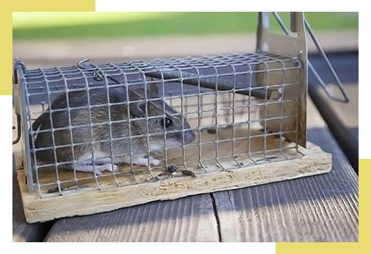 Rodent Specialist Exclusion and Repair in Dallas-Fort Worth