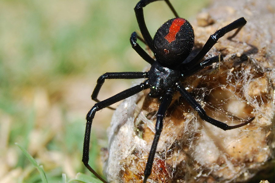 4 Common House Critters in Texas