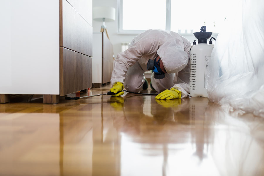 A professional doing a termite treatment
