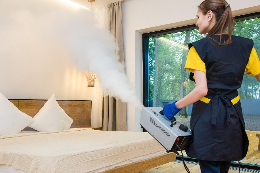 Professional getting rid of bed bugs