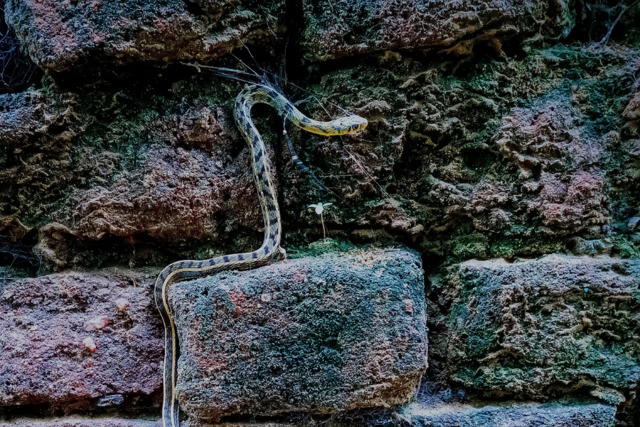 Snake on a wall